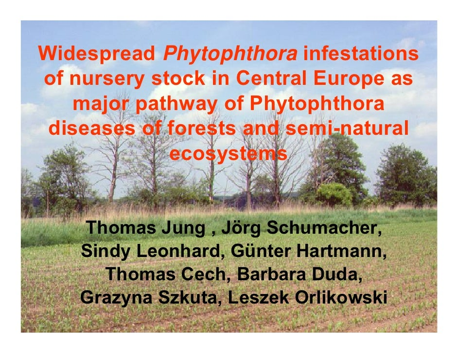 Widespread Phytophthora infestations of nursery stock in Central Europe as     major pathway of Phytophthora  diseases of ...