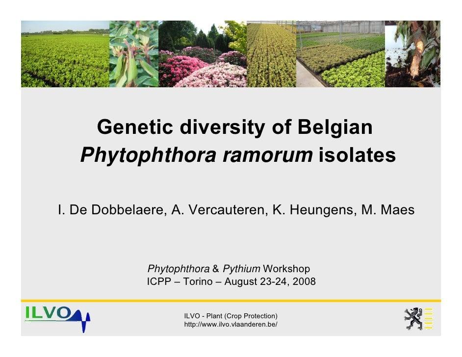 Genetic diversity of Belgian    Phytophthora ramorum isolates  I. De Dobbelaere, A. Vercauteren, K. Heungens, M. Maes     ...