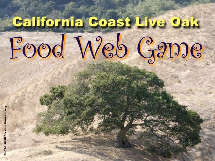 California Coast Live Oak                                     Food Web Game PHOTO: BCNPS Native Here Nursery