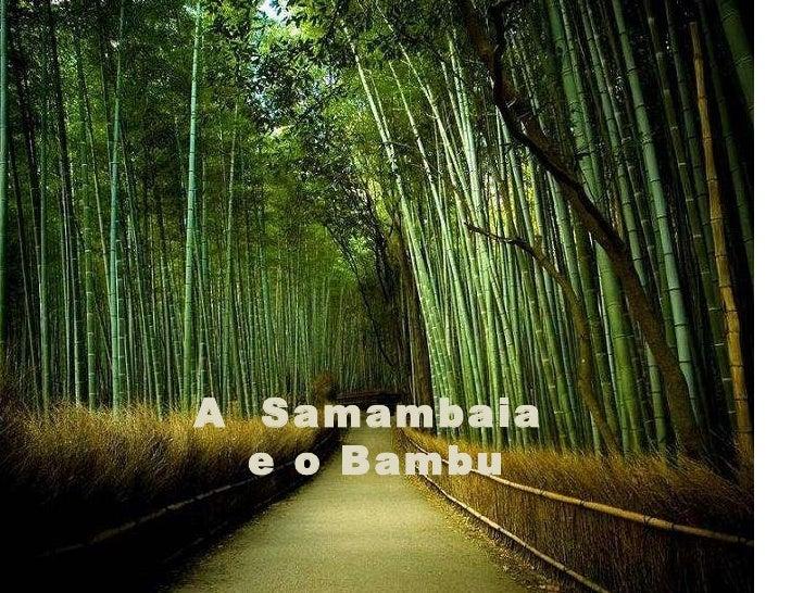 O bambú e_a_samambaia