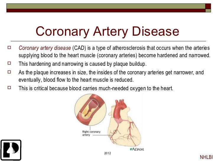 pathogenesis of coronary heart disease This viewpoint describes the pathogenesis of atherosclerosis with this  ws brownerusing the coronary artery calcium score to predict coronary heart disease.
