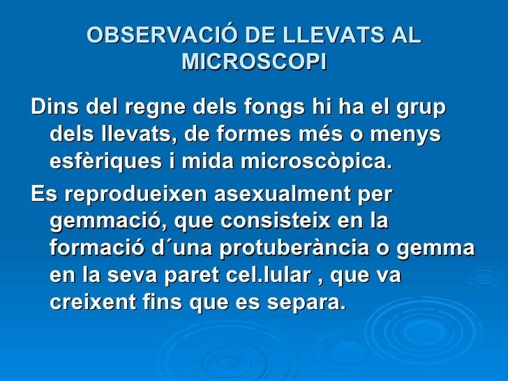OBSERVACIÓ DE LLEVATS AL MICROSCOPI <ul><li>Dins del regne dels fongs hi ha el grup dels llevats, de formes més o menys es...