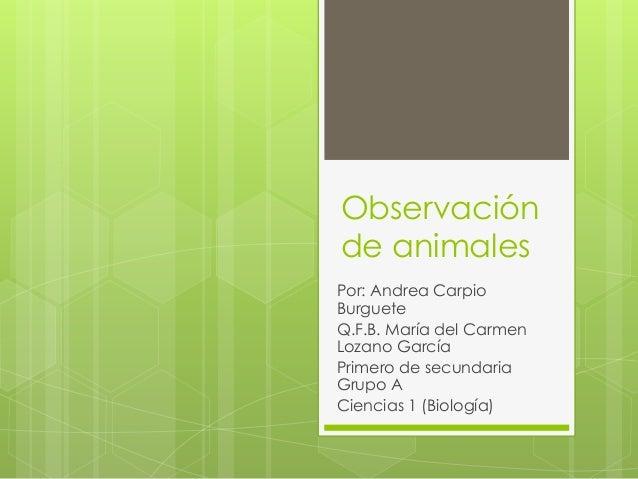 Observación  de animales  Por: Andrea Carpio  Burguete  Q.F.B. María del Carmen  Lozano García  Primero de secundaria  Gru...