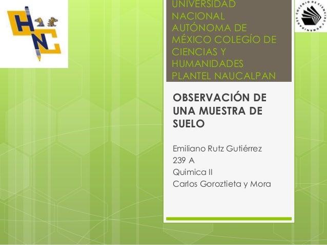 UNIVERSIDAD NACIONAL AUTÓNOMA DE MÉXICO COLEGÍO DE CIENCIAS Y HUMANIDADES PLANTEL NAUCALPAN OBSERVACIÓN DE UNA MUESTRA DE ...