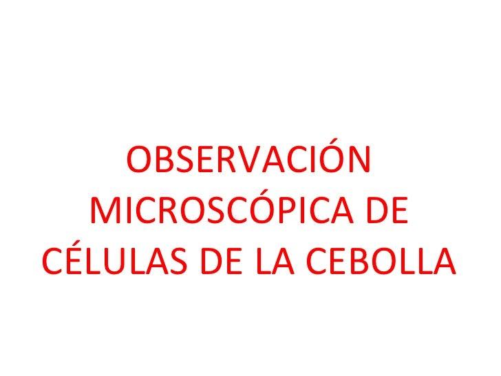 OBSERVACIÓN MICROSCÓPICA DE CÉLULAS DE LA CEBOLLA