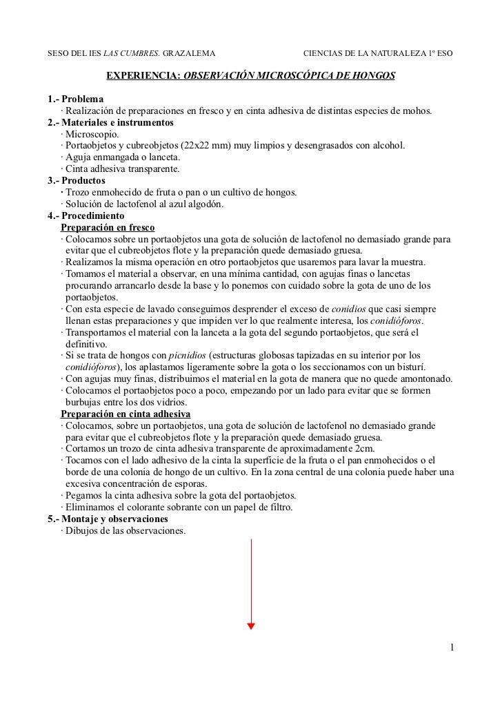 SESO DEL IES LAS CUMBRES. GRAZALEMA                           CIENCIAS DE LA NATURALEZA 1º ESO              EXPERIENCIA: O...