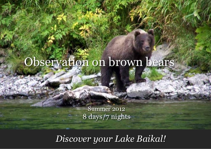 Observation on brown bears            Summer 2012           8 days/7 nights     Discover your Lake Baikal!