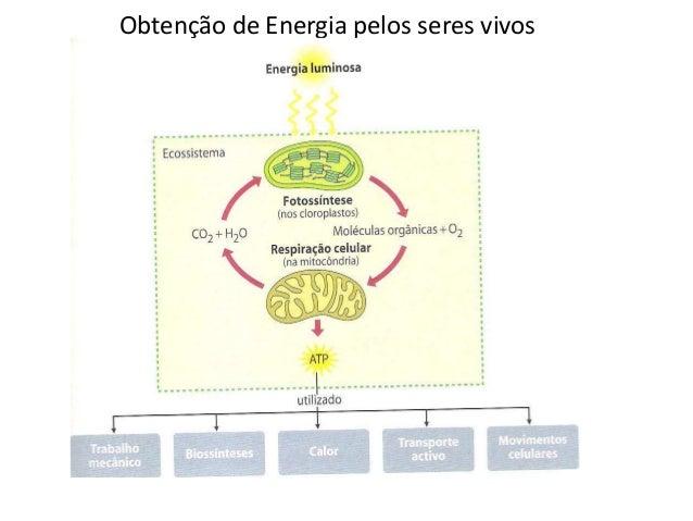 Obtenção de energia  ferm resp