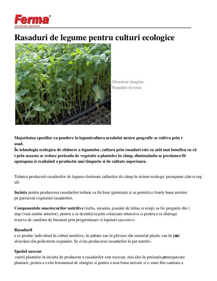 Rasaduri de legume pentru culturi ecologice                                                           Descriere imagine:  ...