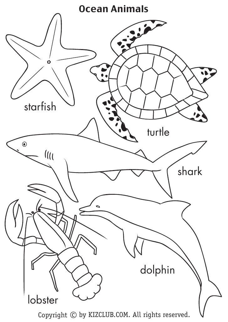 Ocean Animals     starfish                                       turtle                                                  s...
