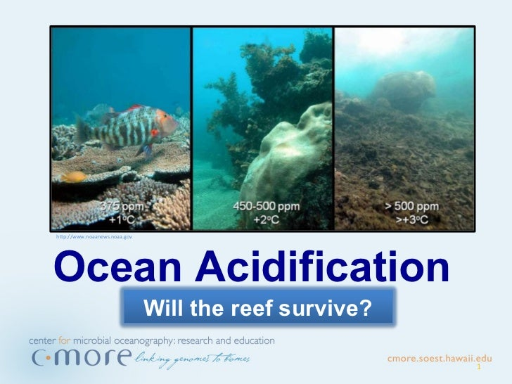 Ocean acidification will-the_reef_survive-non-narrated[1]