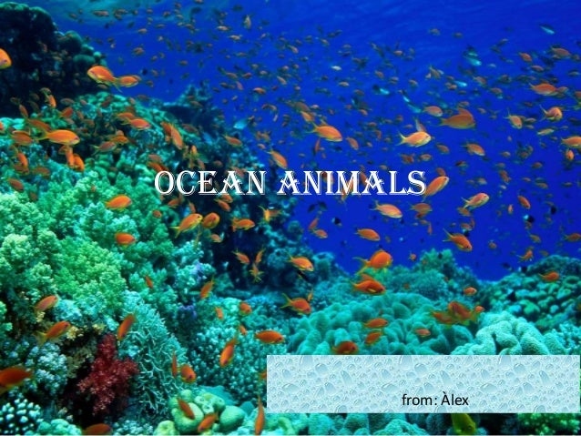 Ocean animals (2)
