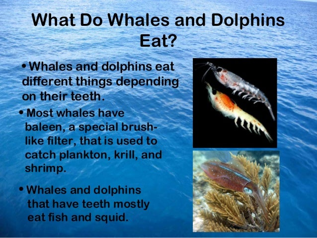 Ocean dolphins and whales powerpoint for The fish that ate the whale