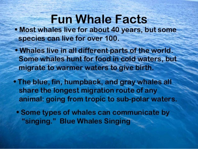 Ocean Whales Facts Fun Whale Facts• Most Whales