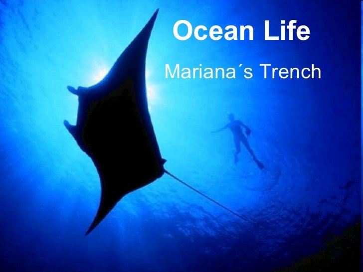 Ocean Life Mariana´s Trench
