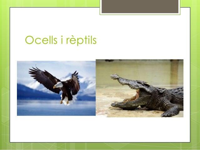 Ocells i rèptils