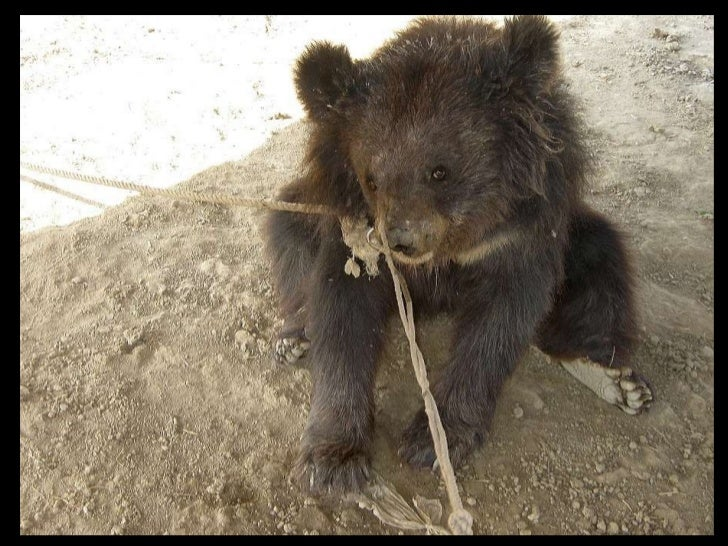Oct bear rescues
