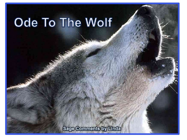 Ode To The Wolf