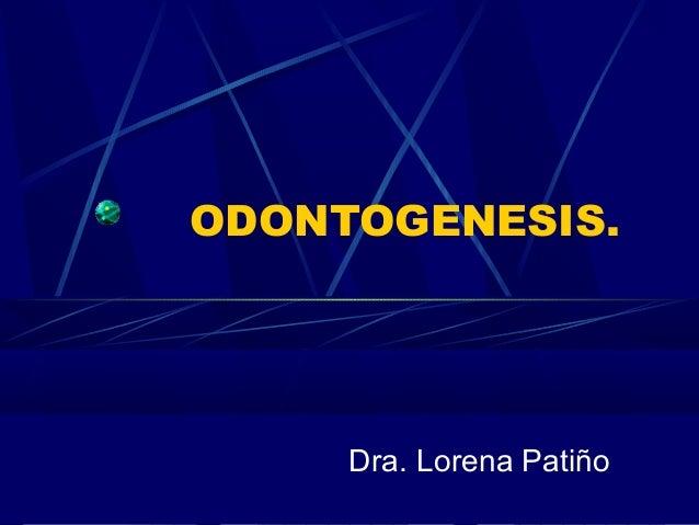 ODONTOGENESIS. Dra. Lorena Patiño