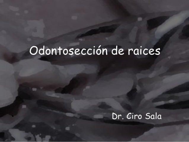 Odontosección de raices•                 Dr. Ciro Sala