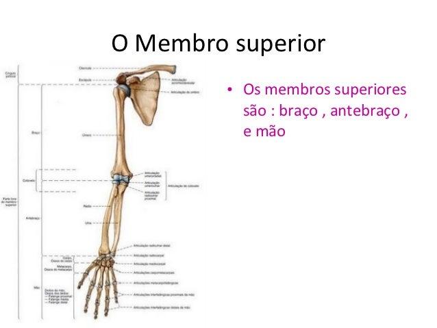 Aumento de operação em um pênis de SPb