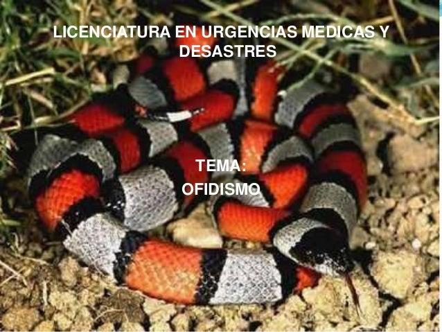 LICENCIATURA EN URGENCIAS MEDICAS Y  DESASTRES  TEMA:  OFIDISMO