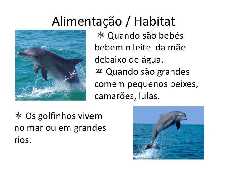 Resultado de imagem para golfinhos