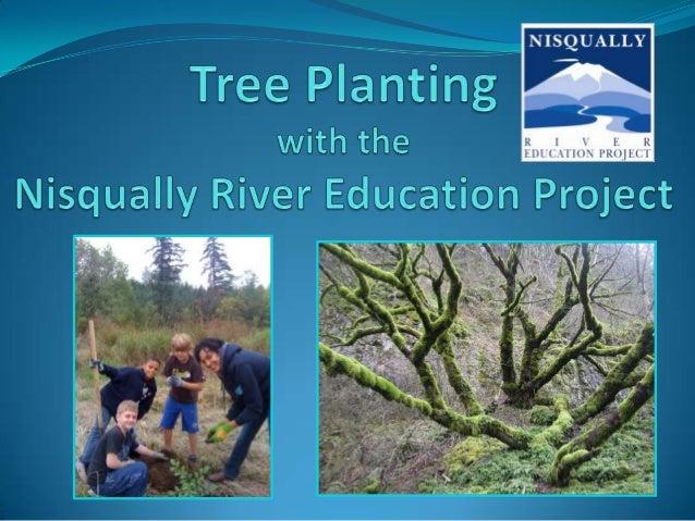 NREP Ohop Tree Planting -Fall 2013