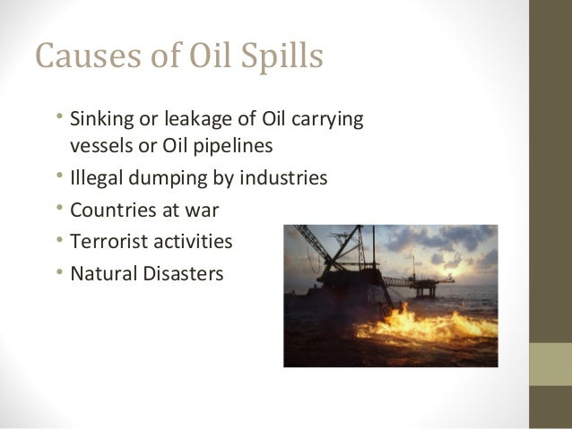 Oil Effect on The Environment Effects of Oil Spills