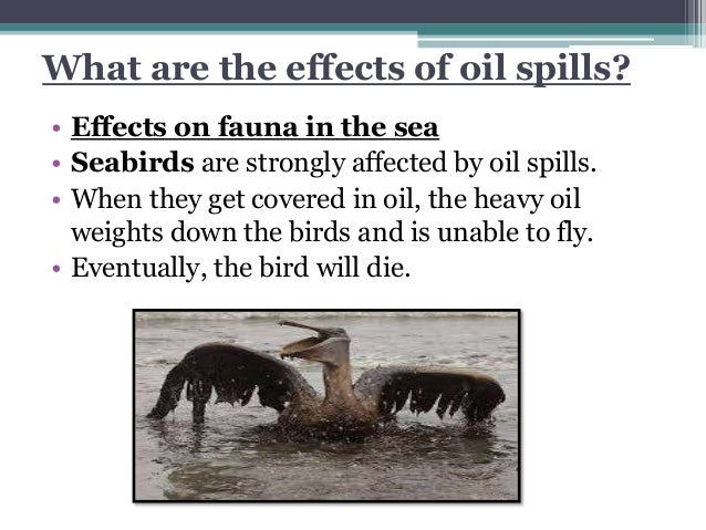 Oil Effects The Effects of Oil Spills