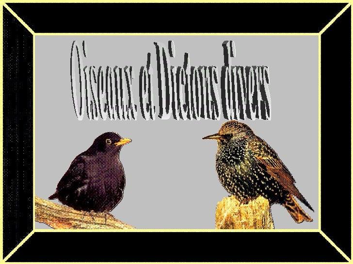 Oiseaux et Dictons divers