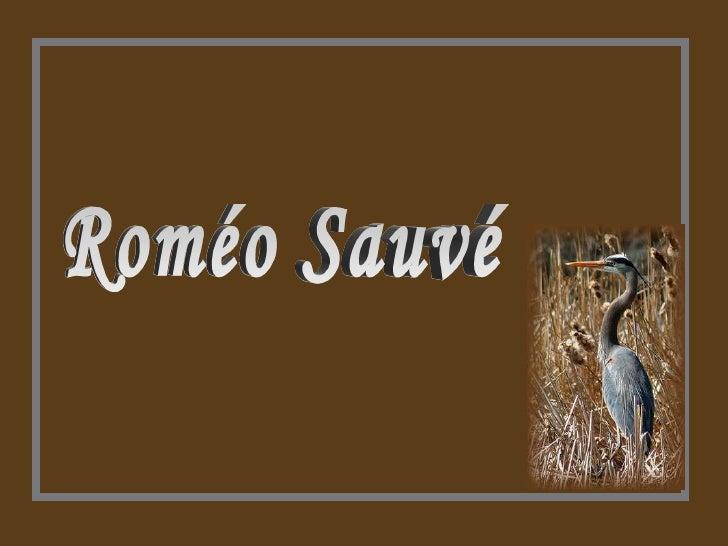 Roméo Sauvé