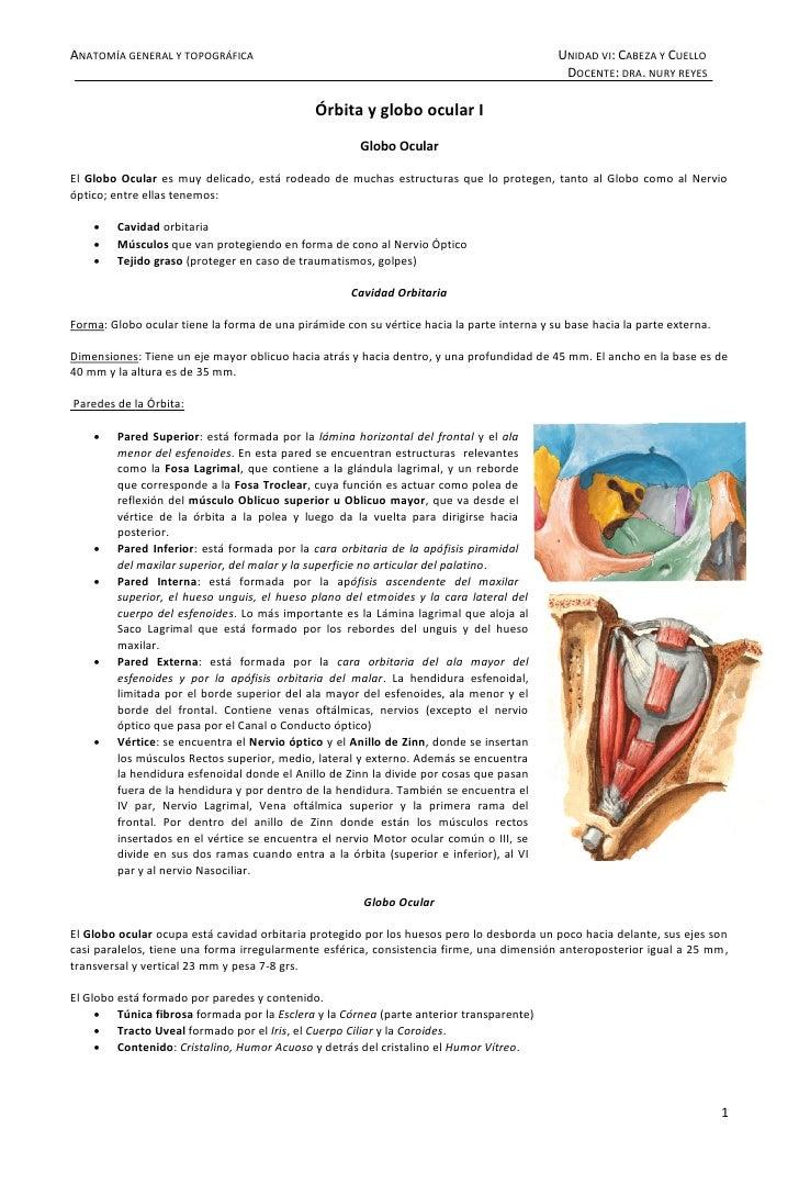 ANATOMÍA GENERAL Y TOPOGRÁFICA                                                              UNIDAD VI: CABEZA Y CUELLO    ...