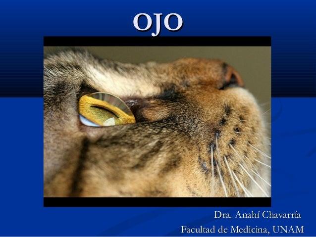 OJO  Dra. Anahí Chavarría Facultad de Medicina, UNAM