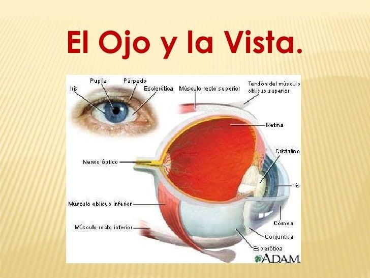 El Ojo y la Vista.