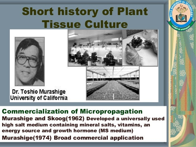 tissue culture research papers 2013 Lacks' story garnered national attention after the release of rebecca skloot's best-selling book the immortal life of henrietta lacks tissue culture research.