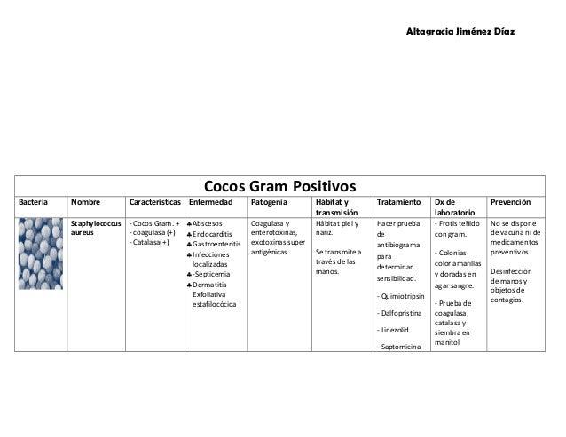 caracteristicas de bacterias gram: