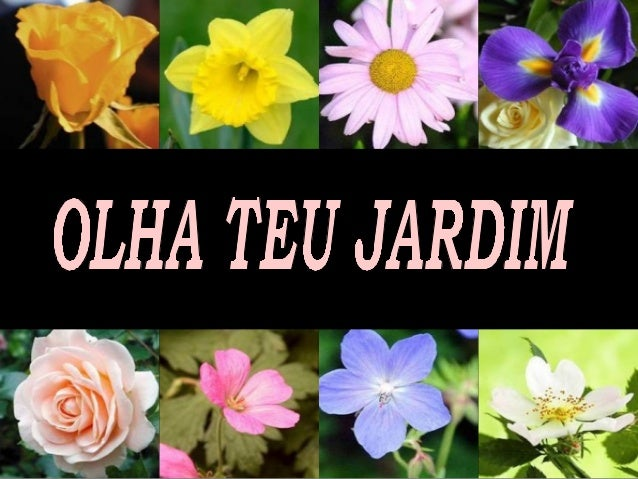 OLHA no teu jardim as rosas entreabertas, e nunca as pétalas caídas;