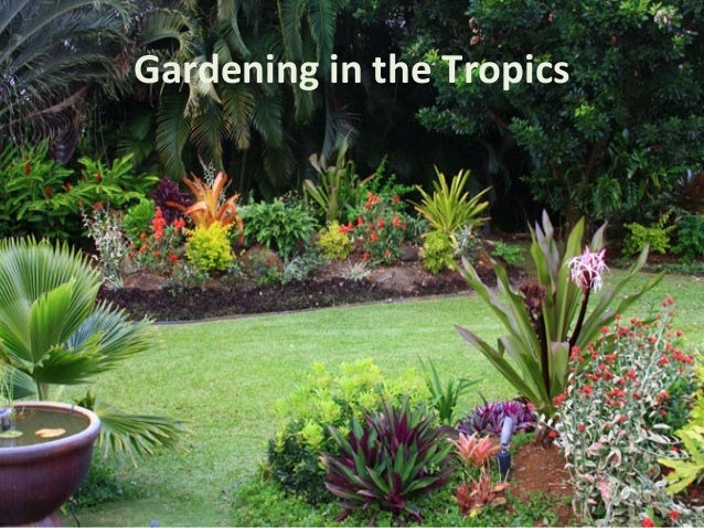 poetry analysis olive senior gardening in the tropics Colonial girls school olive senior gardening in the tropics by olive senior the poetry archive is a not-for-profit organisation with charitable status.
