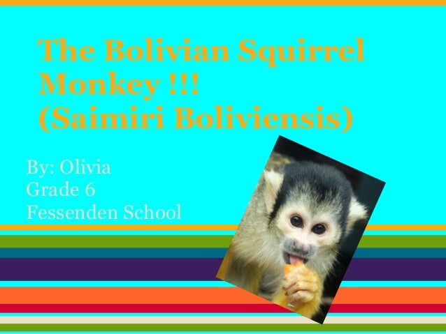 The Bolivian Squirrel Monkey !!! (Saimiri Boliviensis)By: OliviaGrade 6Fessenden School