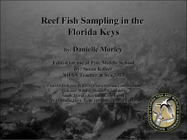 Reef Fish Sampling in theReef Fish Sampling in the Florida KeysFlorida Keys by:by: Danielle MorleyDanielle Morley Edited f...