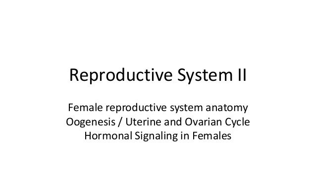 Reproductive System II Female reproductive system anatomy Oogenesis / Uterine and Ovarian Cycle Hormonal Signaling in Fema...