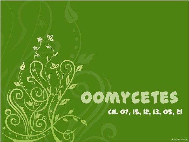 OomycetesOomycetes Life Cycle