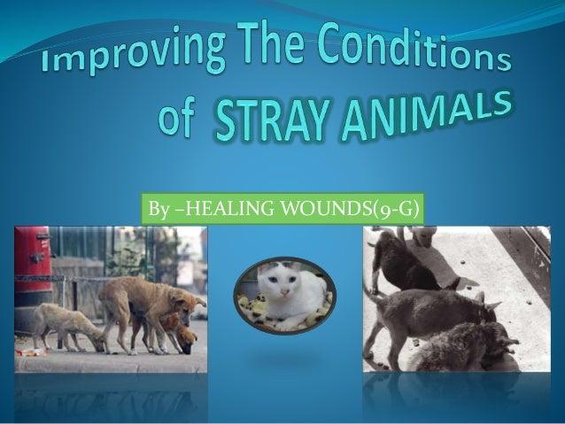 Stray animals statistics - photo#16