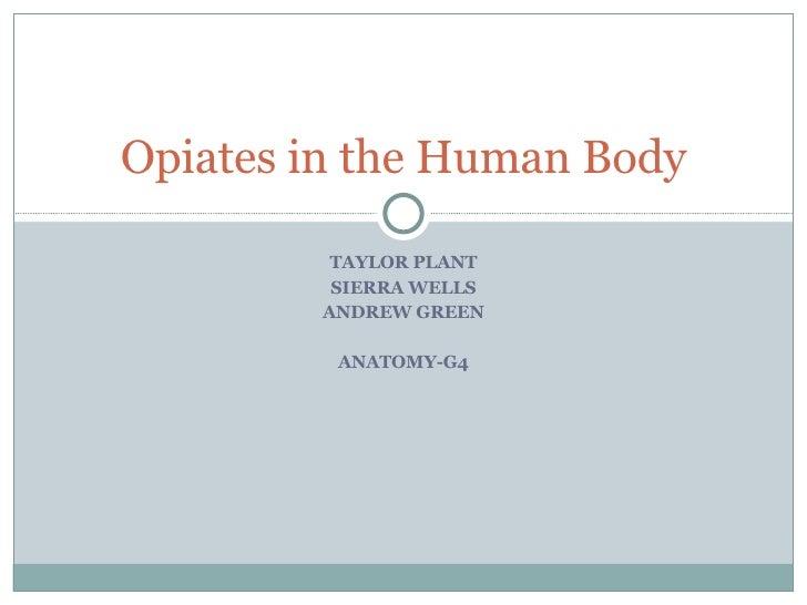 Opiates In The Human Body