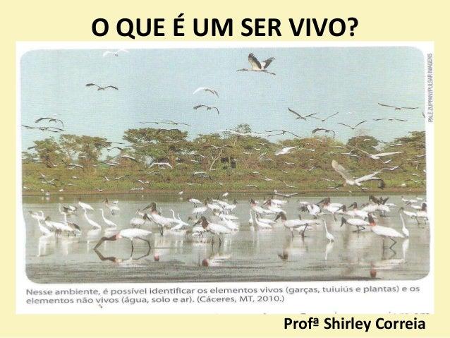 O QUE É UM SER VIVO? Profª Shirley Correia