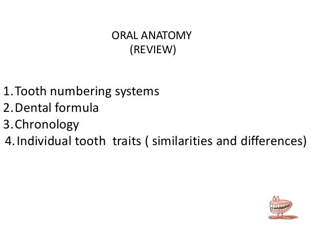 ORAL ANATOMY (REVIEW)  1.Tooth numbering systems 2.Dental formula 3.Chronology 4.Individual tooth traits ( similarities an...