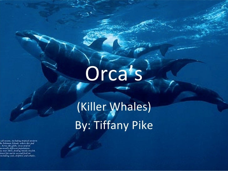 Orca's(Killer Whales)By: Tiffany Pike