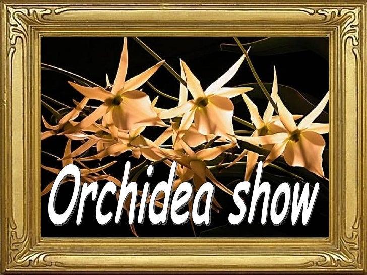 Orchidea show