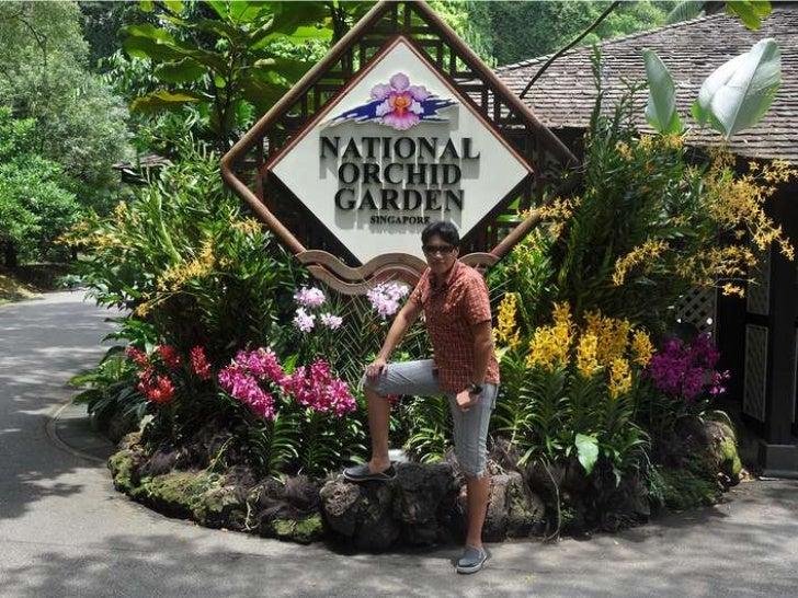Orchid garden singapur